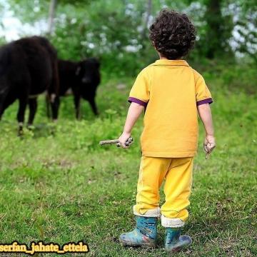 مطالعه رویاهای کودکان در سنین زیر ۶ سال نشان داده که بالغ بر ۹۰ درصد خوابهای آنها در رابطه با حیوانات  است
