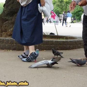 کفشهایی عجیب برای دوستی با کبوترها