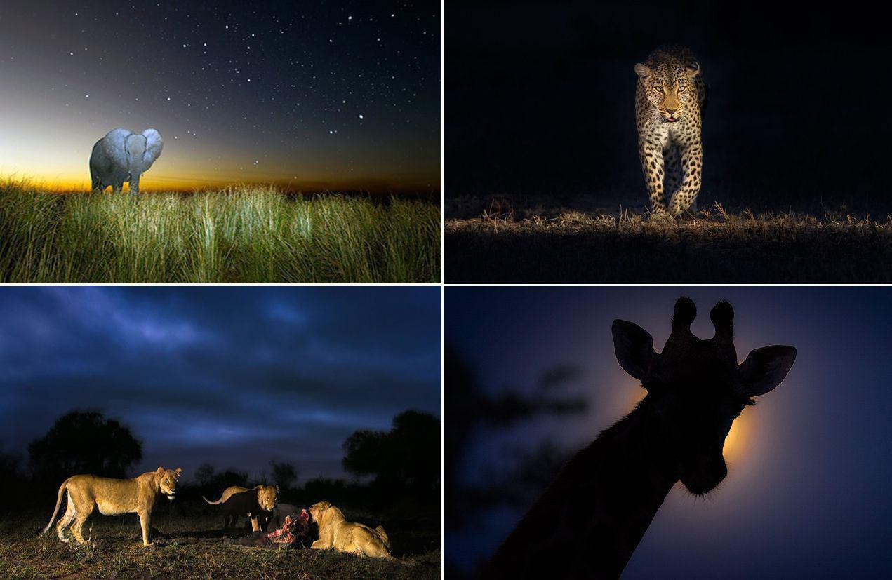 چهره تماشایی حیوانات زیر نور مهتاب
