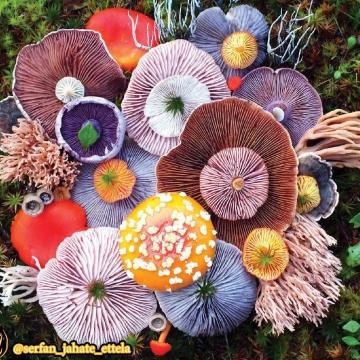 باورتون میشه قارچ این گونه های قشنگ رو داشته باشه؟!