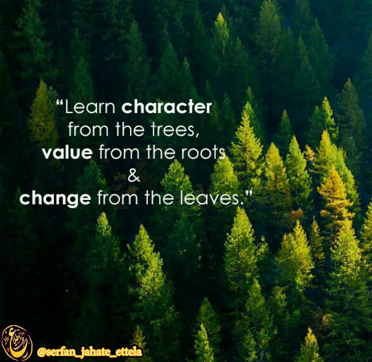 منش را از درختان، ارزش را از ریشه ها؛ و تغییرات را از برگ هایش بیاموزید.