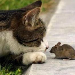 گربه آوردن میخوان یه موش بگیرن. خود گربه سکته کرد