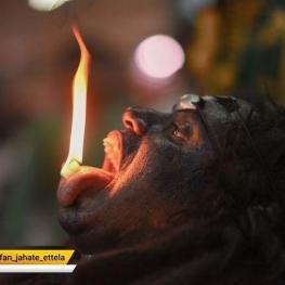 عکس روز نشنال جئوگرافیک نمایی ازیک مرد هندو در جشن ناوراتری
