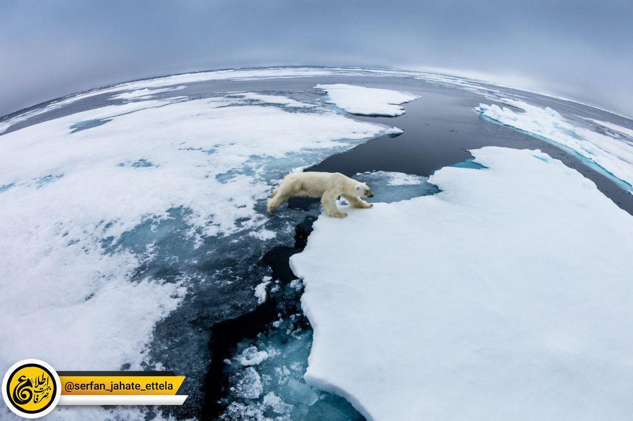تصویر یک خرس قطبی در حال عبور از یخ های شناور در جزایر سوالبار نروژ