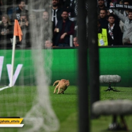 یوفا باشگاه بشیکتاش را به دلیل ورود گربه به استادیوم جریمه کرد.