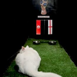پیش بینی بلوط پیش از بازی تونس – انگلستان