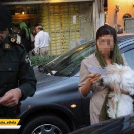 در آغوش گرفتن حیوانات در خودروها و حمل آن در خودرو ممنوع