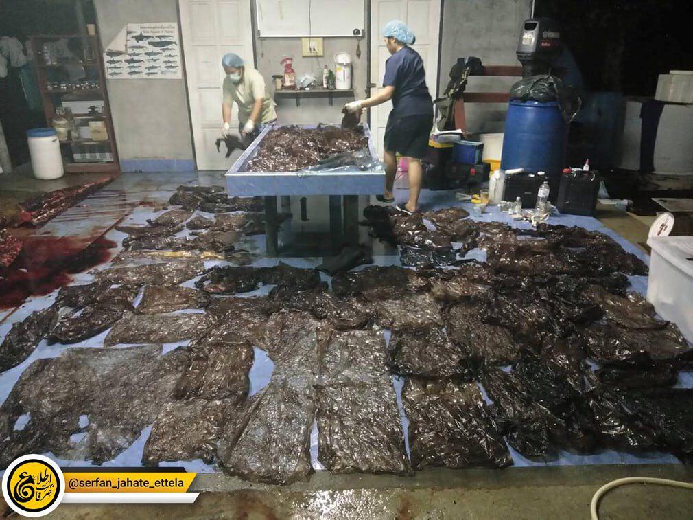 ۸۰ نایلون بیرون کشیده شده از شکم یک وال عظیمالجثه در سواحل تایلند.