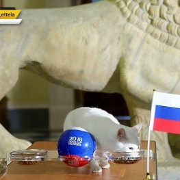 گربه پیشگوی روس چه تیمی را برنده نبرد روسیه و مصر اعلام کرد؟