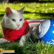 آشیل گربه پیشگوی جام جهانی