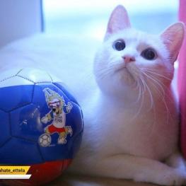 گربه پیشگویی  بازیهای جام جهانی ۲۰۱۸ قبل از پایان این رقابتها مُرد!