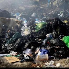 دفع و رهاسازی غیر قانونی زباله های عفونی و بیمارستانی در محدوده سراب قنبر شهر کرمانشاه