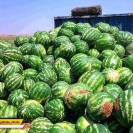 سالی یک سد کرج هندوانه صادر میکنیم