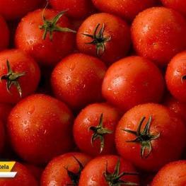 قیمت هر کیلوگرم گوجه فرنگی در بازار مصرف به ۷ هزار تا ۷۵۰۰ تومان رسید