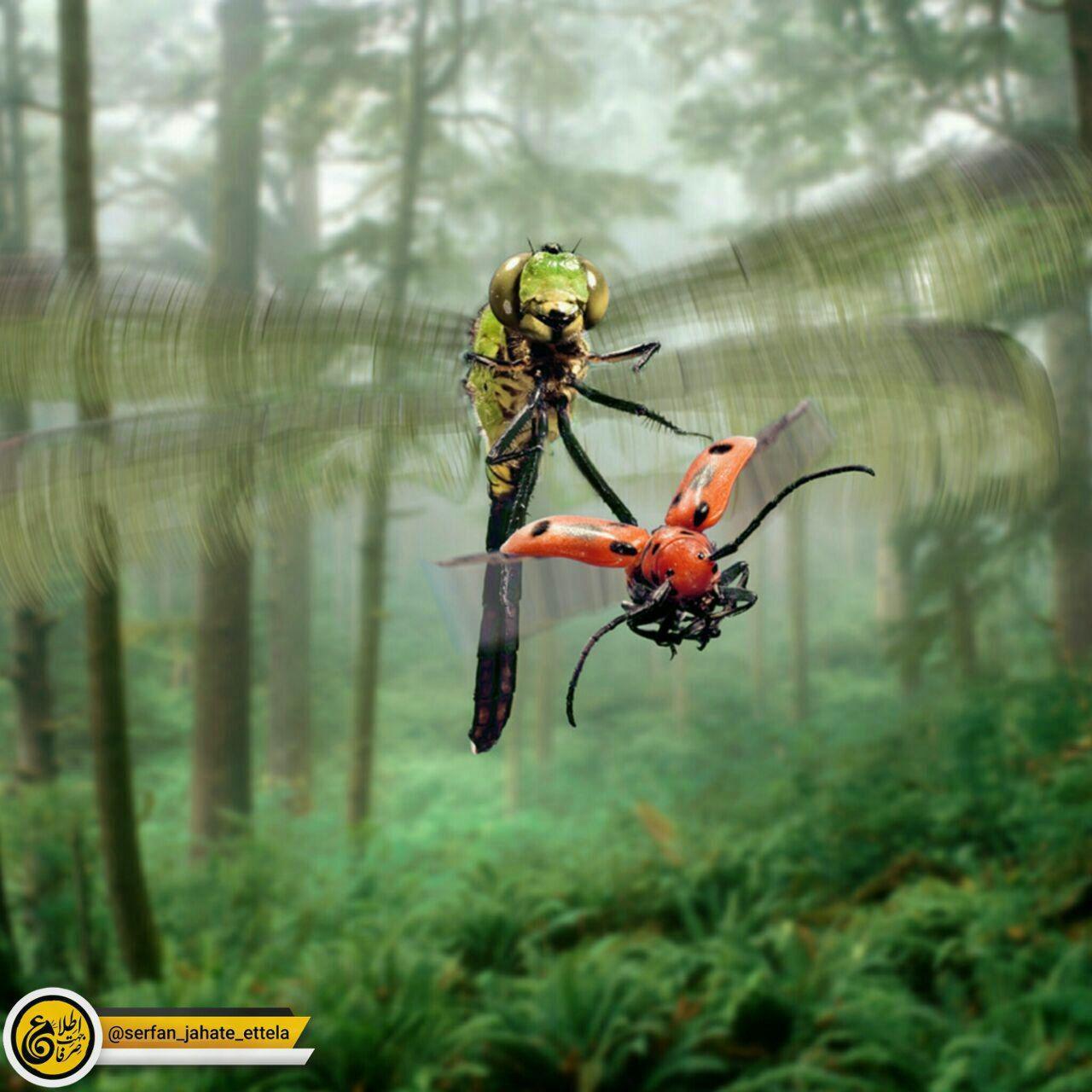 سنجاقک موفقترین شکارچی در طبیعت است !