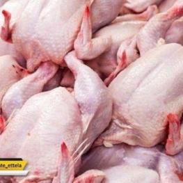 ادامه سیر نزولی قیمت مرغ در بازار
