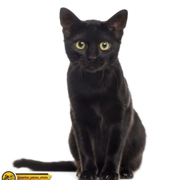 امروز شنبه ۲۷ اکتبر #روز_جهانی گربه سیاه می باشد