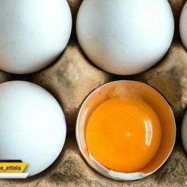 عرضه تخممرغ با نرخ شانهای ۱۳ هزار و ۸۰۰ تومان در بازار