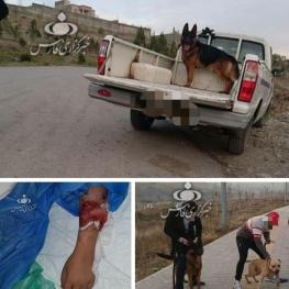 جزییات حادثه وحشتناک حمله دو سگ به دختر ۱۰ ساله در لواسان