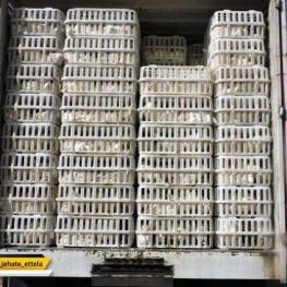 توقیف ۱۵۵۰ مرغ زنده قاچاق در آستارا / بازداشت ۲ نفر