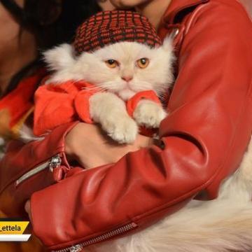 عکس روز:کارناوال حیوانات در کراچی