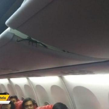 وجود عقرب در هواپیمای Lion Air در هنگام پرواز