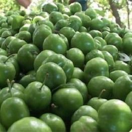 گوجه سبز ۹۰ هزار تومان