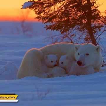 عکس روز به انتخاب نشنال جئوگرافیک؛ کانادا