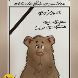 در حاشیه کشته شدن یک توله خرس در سوادکوه مازندران