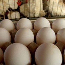 قیمت مصوب مرغ و تخممرغ برای مصرفکننده اعلام شد
