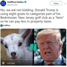 دونالد ترامپ برای اینکه کمتر مالیات بدهد، در زمين گلفش، ٨ راس بز نگه داشته