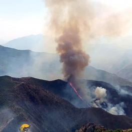 وقوع آتش سوزی در جنگل های قره داغ