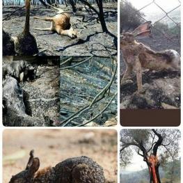 تصاویری از خسارات آتشسوزی جنگلهای ارسباران…