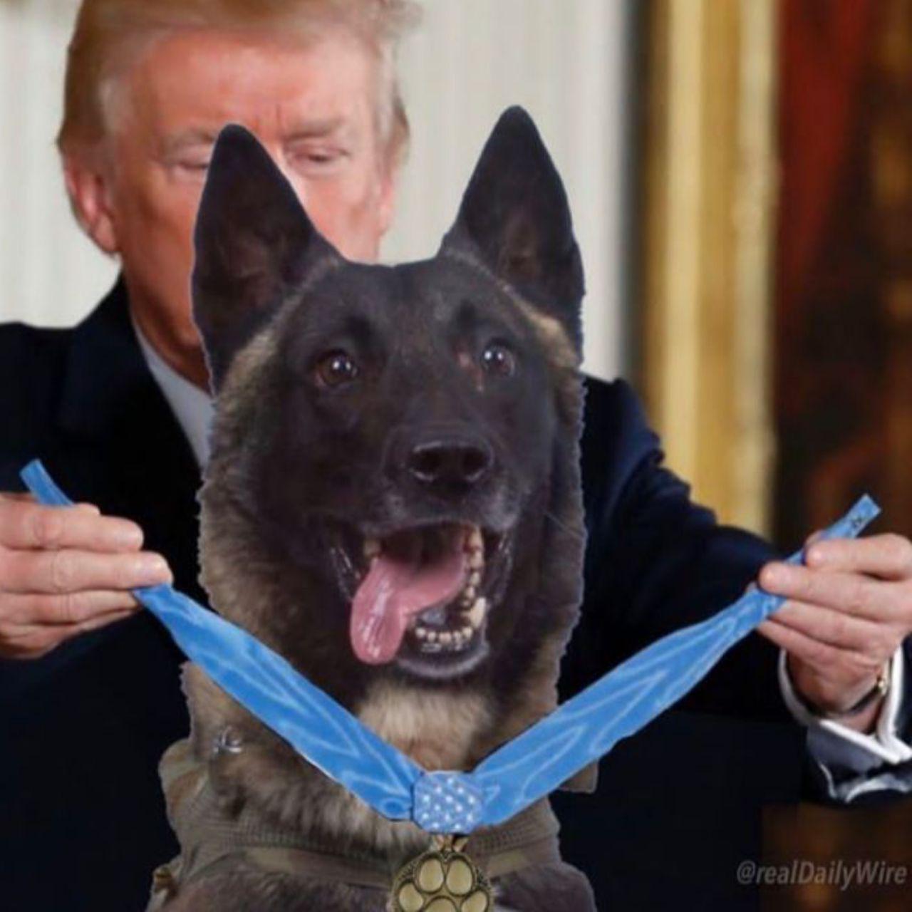 اهدای مدال شجاعت به سگ یابنده «ابوبکر بغدادی»!