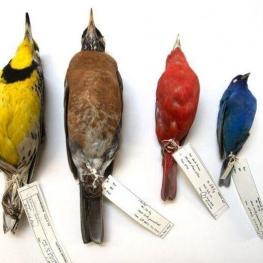 تغییرات اقلیمی عامل کوچک شدن جثه پرندگان