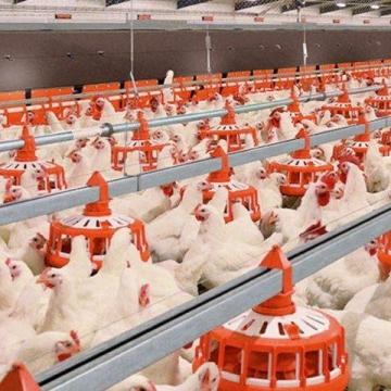 عوارض صادرات مرغ به ازای هر کیلو از ۵ هزار تومان به ۱۵۰۰ تومان کاهش مییابد.