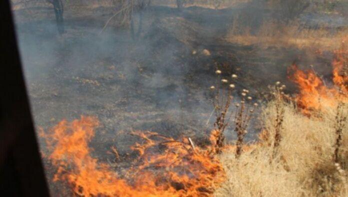 ۲ هزار متر از عرصه های جنگلی بوستان چیتگر تهران در آتش سوخت