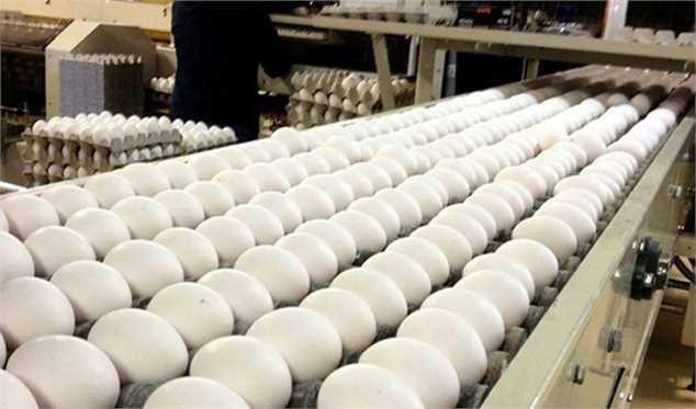 صادرات تخم مرغ مشمول عوارض شد