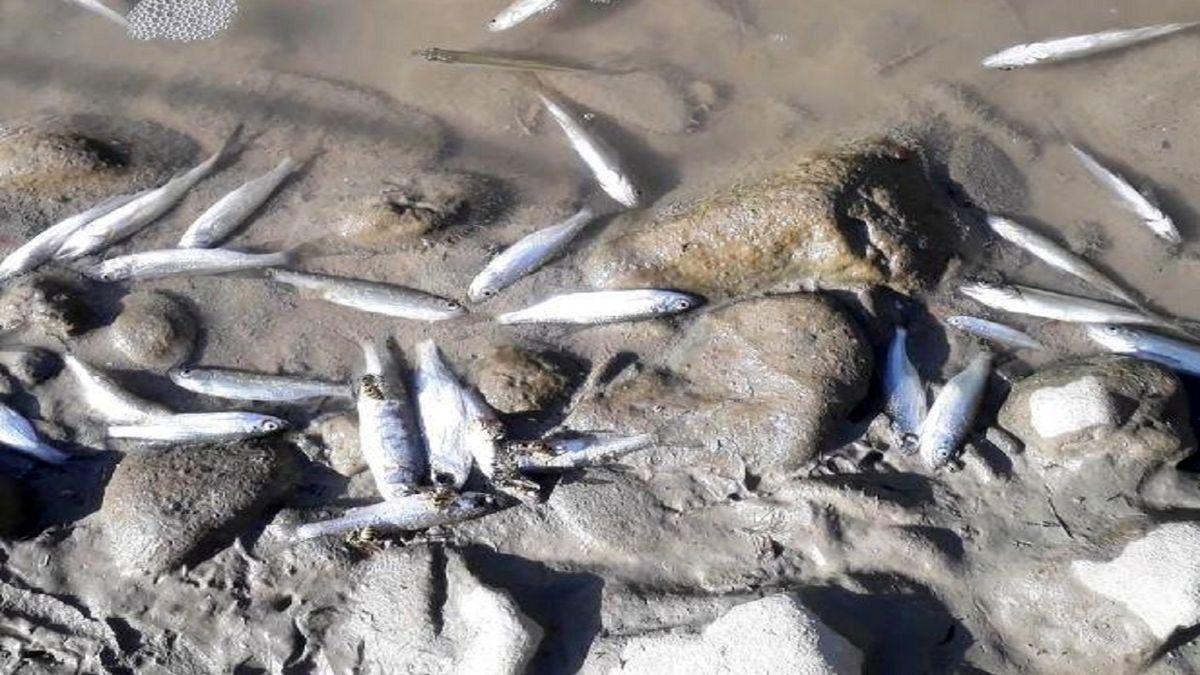 قاتل مرموز ماهیان دز کیست؟