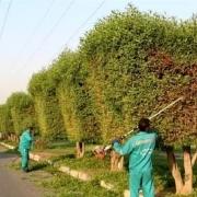 سرقت دستگاههای هرس کارگران شهرداری آبادان با تهدید اسلحه