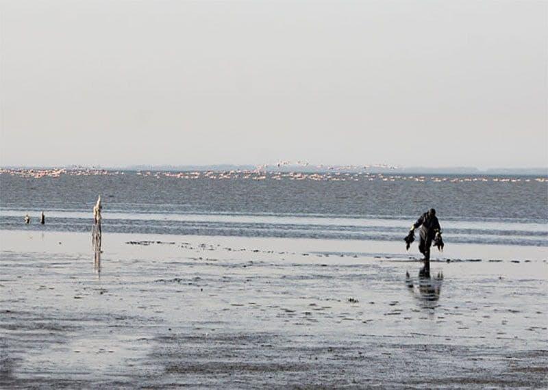 تلفات ۵ هزار بال پرندگان مهاجر در تالاب بین المللی میانکاله