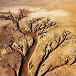 کسب مقام دوم عکاس سیستانی در جشنواره بینالمللی دبی