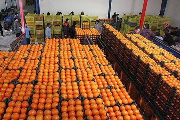 فروش مستقیم میوه باغداران در۸۰ نقطه تهران