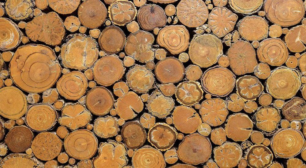 زراعت چوب در کشور دوباره رونق گرفت