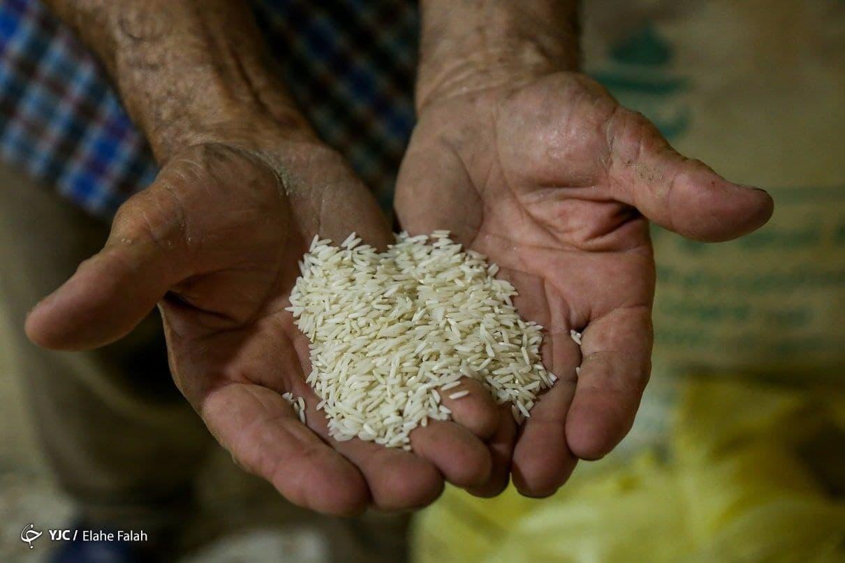 برنج هم وارد بورس شد