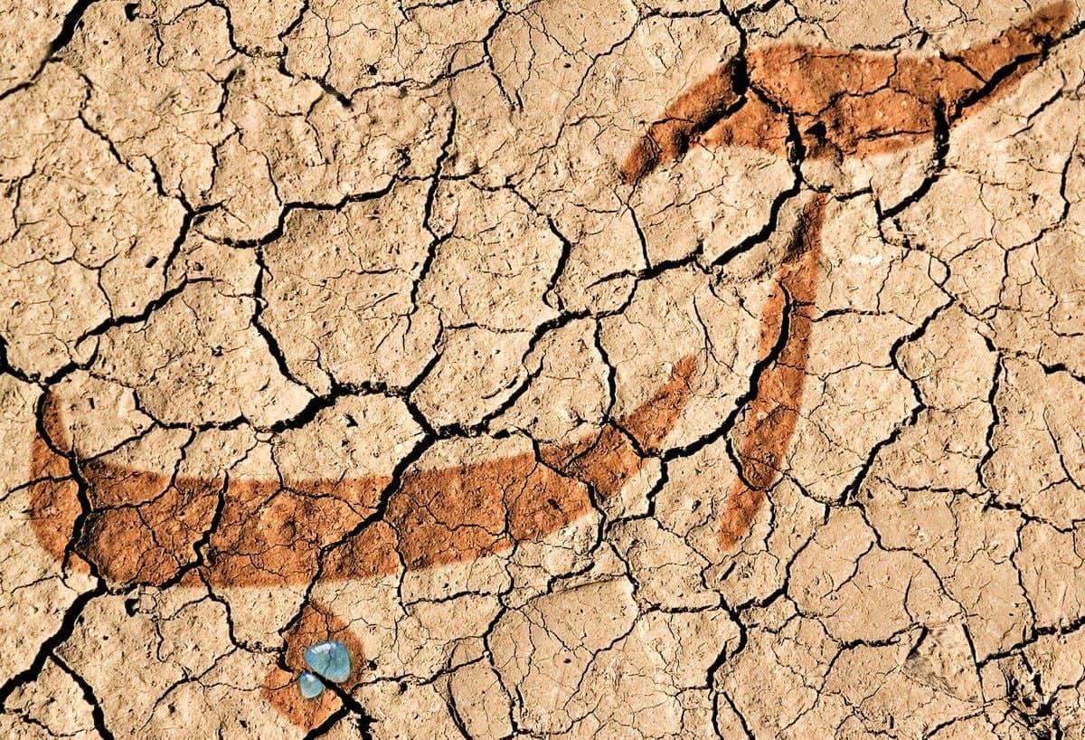 وزیر نیرو: کشور، درگیر خشکسالی بیسابقه در ۵۲ سال اخیر هستیم