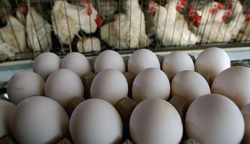 تخم مرغ رسما از روز چهارشنبه گران میشود!