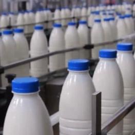 سرانه مصرف شیر چقدر است؟